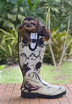 magicalnaturetour: These boots were made for slothing by Sloth Sanctuary and Bradley Ireland Productions via Cute Overload