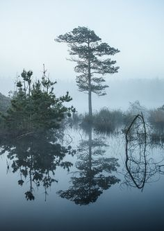 At dawn in Nationalpark Thy of Denmark on an incredible morning with absolute no wind. A fairytale like forest with mist and a special feeling to it. Roadtrip, Mists, Dawn, Fairy Tales, Reflection, My Photos, The Incredibles, River, Landscape