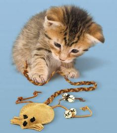 Cats Toys Ideas - 25 Free Patterns For DIY Cat Items - Ideal toys for small cats Homemade Cat Toys, Diy Cat Toys, Guinea Pig Toys, Ideal Toys, Pet Mice, Cat Carrier, Cat Crafts, Animal Crafts, Animal Projects