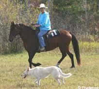Η   ΕΦΗΜΕΡΙΔΑ   ΤΩΝ    ΣΚΥΛΩΝ: Ποιοι  σκύλοι χρησιμοποιούνται μαζί με άλογα...