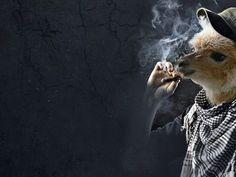 A funny Smoking