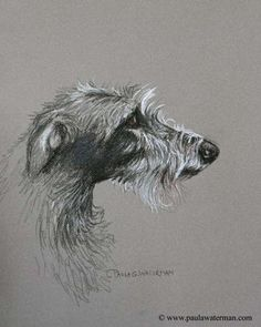 Paula Waterman - Scratchboard, Oil Paintings, Sculptures, Nature, Marine and Animal Art
