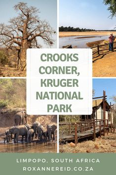 Visiting Kruger National Park? If you're in the north, don't miss a visit to Crooks Corner, Kruger National Park. Find out about its infamous backstory as well as other things to do in the area, like visiting Pafuri picnic site, going for a game drive or hiking the 3-night Nyalaland Wilderness Trail. There are also tips on where to stay in the far north of Kruger Park, from Punda Maria camp to Pafrui Border camp. #safari Kruger National Park, National Parks, Slow Travel, Travel Tips, Union Of South Africa, Wilderness Trail, Wildlife Safari, Africa Travel, Canada Travel
