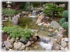 building a pond - Google Search