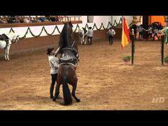Saltos de caballos - Doma Clásica - Fundación Real Escuela Andaluza de Arte Ecuestre
