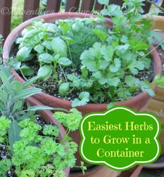 Want a herb garden but don't have the room? These herbs are the easiest to grow in a container! Small space gardening for the win! Easy Herbs To Grow, Growing Herbs, Gardening For Beginners, Gardening Tips, Pallet Gardening, Low Maintenance Garden Design, Basil Plant, Types Of Herbs, Herbs Indoors