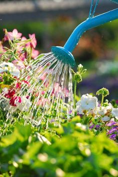 Watering the garden is essential to ensure plants get what they need to flourish. Same for suppliers