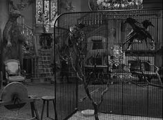 1000 images about home interior living room on pinterest for The addams family living room