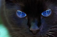 SkyClan Cats - Fernstar's SkyClan. Beautiful black cat. I love the eyes. I just want to say thanks to people who are following this board. I like the likes and repins. It means a lot to me. This is worth the effort because they are not evil and they are not unlucky. Thanks again for the likes and repins. The Incensewoman