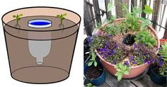 See related links to what you are looking for. Flower Pots, Flowers, Diy And Crafts, Planter Pots, Pergola, Art Deco, Canning, Creative, Gardening