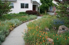 Using native California plants to save on water in the front yard. Beautiful! Embrace your environment!