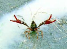 Louisiana State Symbols - Bing Images