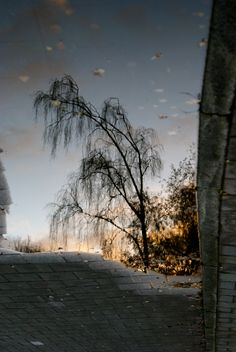 #nature #holland #sunset #tree #water #street #photography