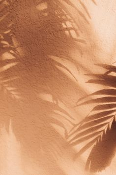 Lily Rose // Shadows in Mauritius Cream Aesthetic, Brown Aesthetic, Aesthetic Vintage, Sun Aesthetic, Aesthetic Pastel, Look Wallpaper, Wallpaper Backgrounds, Iphone Wallpaper, Peach Wallpaper