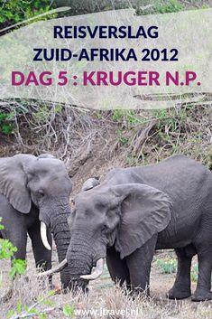 Dag 5 van mijn 23-daagse groepsrondreis door Zuid-Afrika breng ik door in het bekende nationale park in Zuid-Afrika: het Kruger National Park. Alles over de vijfde dag van mijn reis door Zuid-Afrika lees je hier. Lees je mee? #zuidafrika #gamedrive #wildlife #krugernationalpark #reisverslag #jtravel #jtravelblog