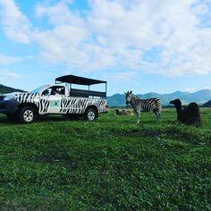Isso tudo é muito lindo! #Sáfari #LugarDeSerFeliz ;)  Reserve → http://hotelportobello.com.br/reservas/