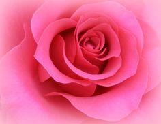 Romance Rose / Macro Photography by breathofanangel on Etsy, via Etsy.