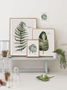 Ботаника: тренд в создании интерьера | Блог elisheva.ru