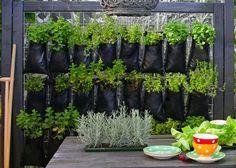 vertical-garden-close-up
