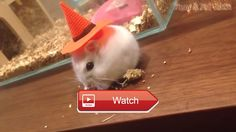 🐬 Funny Animals In Costumes Funny Animal Videos Compilation December 🐧 Funny Animals In Costumes Funny Animal Videos Compilation December…