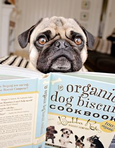 My Pug Loves this Book...