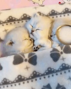 [GIF] How to quickly wake the kittens? - Kittens - Ideas of Kittens - [GIF] How to quickly wake the kittens? The post [GIF] How to quickly wake the kittens? appeared first on Cat Gig. Cute Baby Cats, Cute Little Animals, Cute Cats And Kittens, Cute Funny Animals, I Love Cats, Kittens Cutest, Cute Dogs, Baby Kitty, Pet Cats