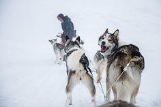 Dog sledding.