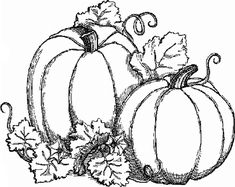 Google Image Result for http://www.coloring-pictures.net/drawings/Autumn/two-pumpkins.gif
