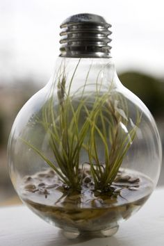Unique-garden12-5-19_rect540  http://thehipsterho.me/2010/01/how-to-make-a-tiny-terrarium-in-a-light-bulb/comment-page-1/#comments
