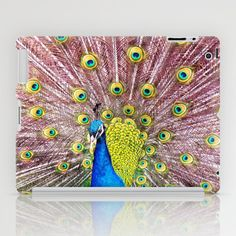 Peacock,All Images copyright 2014 © Andrew Barke Photography