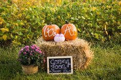 "A fantastic and funny idea of an outdoor gender reveal with pumpkins for a fall baby shower! Paint a little pumpkin and let your guests scream: ""It's a girl! Pumpkin Gender Reveal, Fall Gender Reveal, Gender Reveal Pictures, Halloween Gender Reveal, Baby Shower Gender Reveal, Baby Gender, Gender Party, Baby Baby, Bebe"