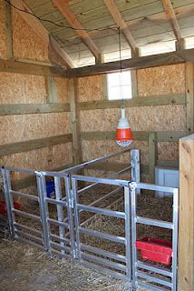 inside of sheep shed, I want to build something similar for goats!