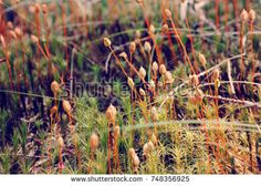 Abstract plants nature composition, Bright colors of tiny natural wonders. Close up of the moss and grass. Growing down. Beautiful texture, nature wallpaper, background, macro pattern.  https://www.shutterstock.com/g/PaulaJeziorska?rid=182806274&utm_medium=email&utm_source=ctrbreferral-link