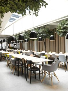 Garden inspired cafe - like the combination of indoor trees, plus clean cool lines