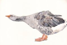 Gander Painting  Goose Print of watercolor by Splodgepodge on Etsy, $20.00