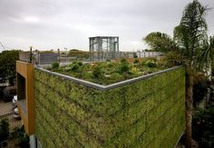 A Beautiful green wall and roof top garden.