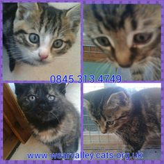 Ready for homes in approx 3wks #catsprotection #darlington www.wearvalley.cats.org.uk