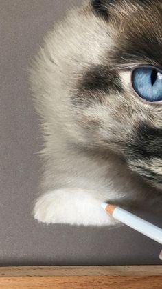 Soft Pastel Art, Pastel Artwork, Pastel Drawing, Realistic Animal Drawings, Colorful Drawings, Frida Art, Pastel Pencils, Color Pencil Art, Animal Paintings