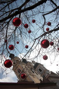 Red Xmas by ellixille @ http://adoroletuefoto.it