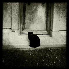Black cat in Parisian cemetery
