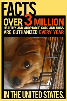TOO many!  Spay - neuter - adopt - be part of the solution.