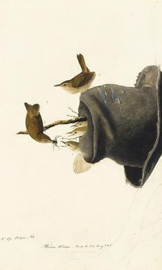 """John James Audubon (1785–1851), """"House Wren (Troglodytes aedon),"""" study for Havell plate no. 83, circa 1824–29, watercolor, graphite, pastel, gouache, black chalk and touches of black ink on paper, laid on card; 193/16 by 115/8 inches. New-York Historical Society, purchased for the society by public subscription from Mrs John J. Audubon, 1863.17.83"""