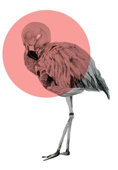 Stock Photo : flamingo