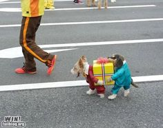 Carnival for dogs