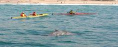 Dolphin Adventure kayaking Plett