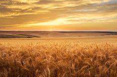 Golden by Brent Elsberry