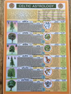 "The Celtic Calendar, with the trees that correspond to each month (""moon-th""). The names of some of these trees are then mapped to letters in the ""Ogham"" alphabet. In his seminal ""White Goddess"". Celtic Symbols And Meanings, Druid Symbols, Celtic Runes, Celtic Paganism, Irish Tattoos, Celtic Tattoos, Tattoo Symbols, Ogham Alphabet, Calligraphy Alphabet"