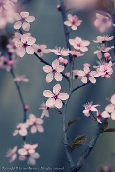 Ideas flowers photography wallpaper phone wallpapers cherry blossoms for 2019 Little Flowers, Beautiful Flowers, Flor Magnolia, Rose Flower Wallpaper, Aesthetic Photography Nature, Flower Invitation, Beautiful Nature Wallpaper, Flower Quotes, Flower Aesthetic