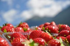 South Tyrolean Strawberries