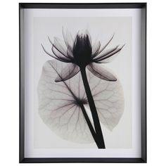 Printfinders 'Tropical Water Lily' by Judith McMillan Framed Photographic Print Frame Color: Black, Mat Color: White Framed Art Prints, Framed Artwork, Fine Art Prints, Poster Prints, Wall Art, Water Lily Tattoos, Flower Tattoos, Xray Flower, Flower Art